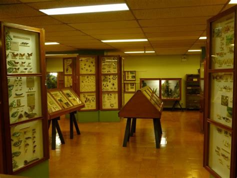Visit the Museum of Insects - Go Visit Costa Rica