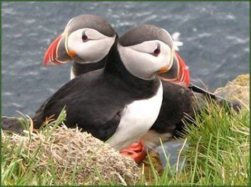 Puffin Island, Anglesey - An illustrated guide to