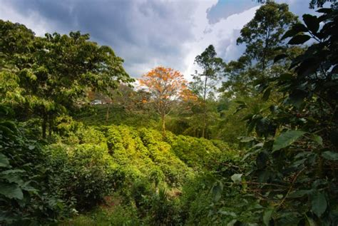 Visiting a coffee plantation in Costa Rica - Go Visit
