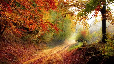 Beautiful Autumn Road Wallpapers   HD Wallpapers   ID #16828