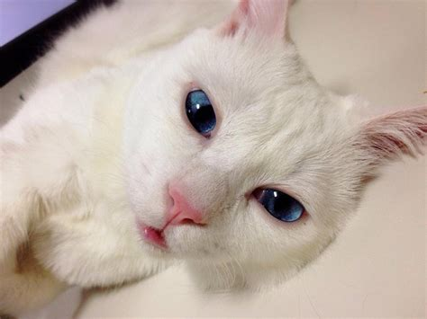 This Cute Cat Transforms Into An Ugly Monster When